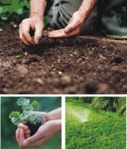 Plantación y jardineria